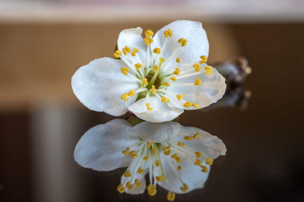 International Day Of Nowruz