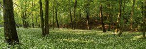 Arborist Appreciation Day