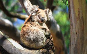 national day of Australia